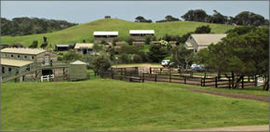 Ace Hi Riding Ranch - Grafton Accommodation