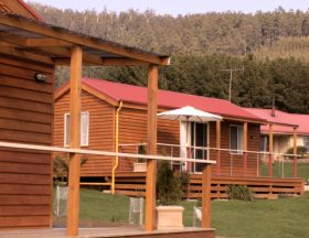 Maydena Country Cabins Accommodation  Alpaca Stud - Grafton Accommodation