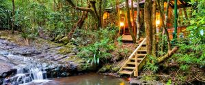 The Mouses House - Rainforest Retreat - Grafton Accommodation