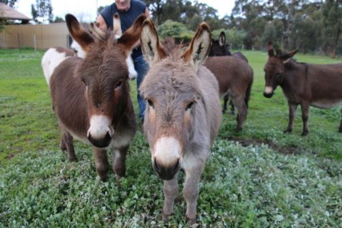 Donkey Tales Farm Cottages - Grafton Accommodation
