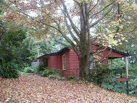 Turkeys Nest Rainforest Cottage - Grafton Accommodation