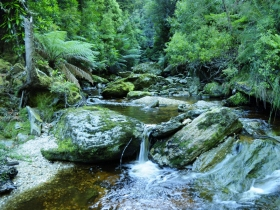 Tarkine Wilderness Experience at Corinna - Grafton Accommodation