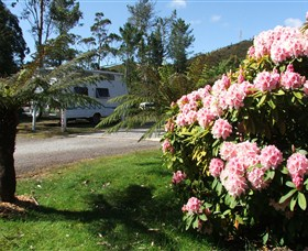 Zeehan Bush Camp  and Caravan Park - Grafton Accommodation