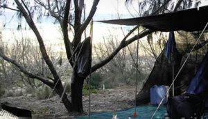 Main Beach Foreshore Camping Grounds - Grafton Accommodation