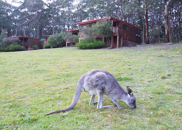 Jenolan Caves Cottages - Grafton Accommodation