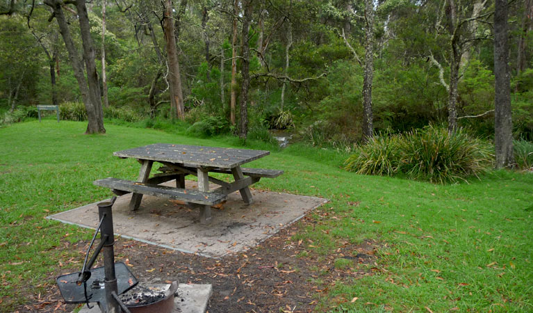 Chaelundi campground - Grafton Accommodation