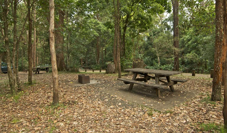 Sheepstation Creek campground - Grafton Accommodation