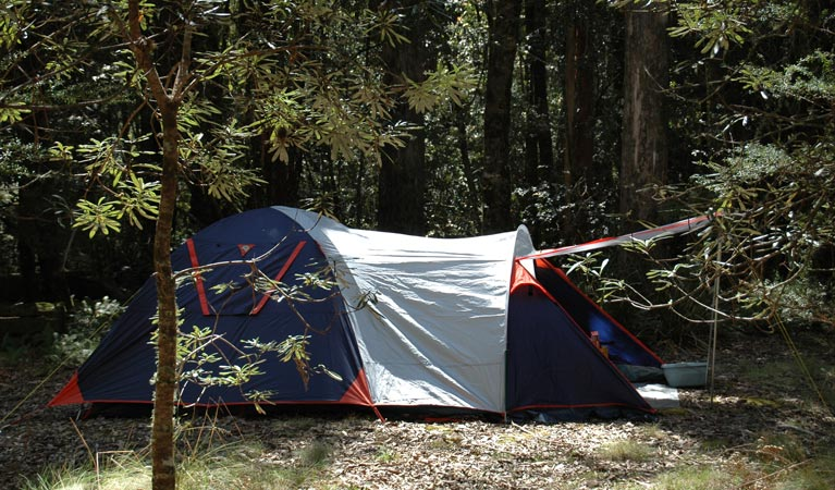 Thungutti campground - Grafton Accommodation