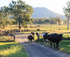 Tommerups Dairy Farmstay - Grafton Accommodation