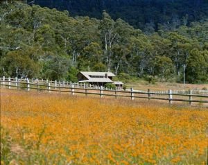 Pender Lea Alpine Guest Accommodation - Grafton Accommodation