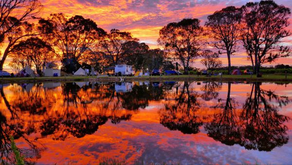 Coonawarra Bush Holiday Park - Grafton Accommodation