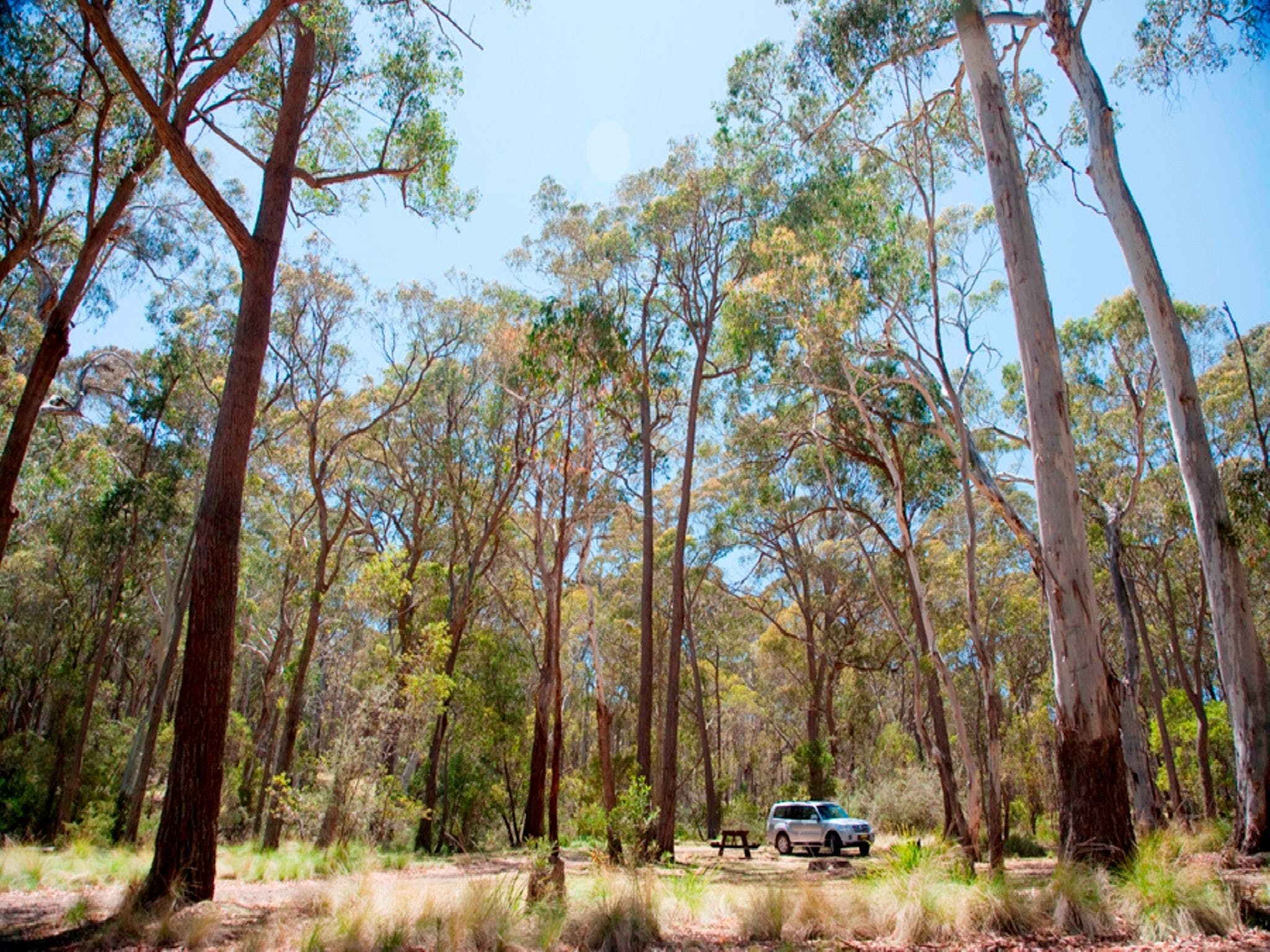 Coolah Tops National Park Camping - Grafton Accommodation