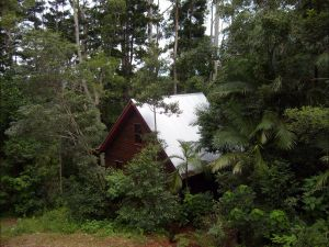Turkeys Nest Rainforest Cottages Mt Glorious - Grafton Accommodation