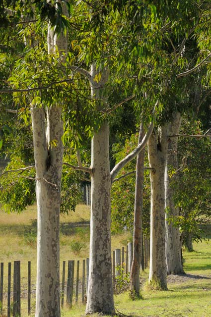 Stringybark Cottages - Grafton Accommodation