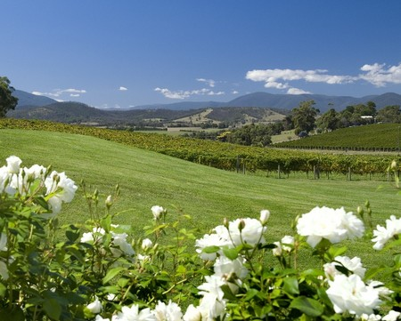 Balgownie Estate Vineyard Resort and Spa - Grafton Accommodation