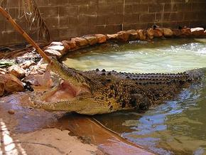 Wyndham Zoological Gardens and Crocodile Park - Grafton Accommodation