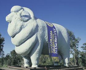 Giant Ram Tourist Park - Grafton Accommodation