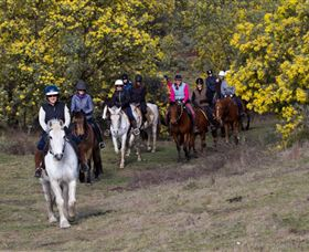 Burnelee Excursions on Horseback - Grafton Accommodation