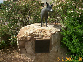 Dingo Statue - Grafton Accommodation