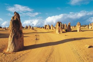 Pinnacles Desert Koalas and Sandboarding 4WD Day Tour from Perth - Grafton Accommodation
