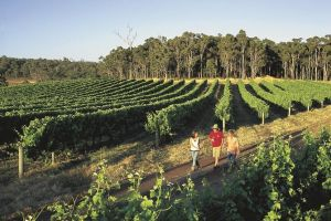 Margaret River Caves Wine and Cape Leeuwin Lighthouse Tour from Perth - Grafton Accommodation
