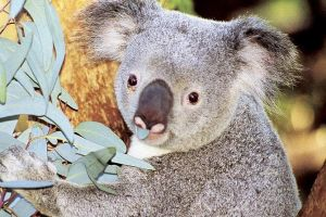 Perth Zoo General Entry Ticket and Sightseeing Cruise - Grafton Accommodation