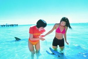 Monkey Mia Dolphins  Shark Bay Air Tour From Perth - Grafton Accommodation
