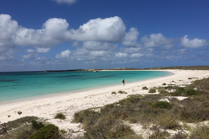 Abrolhos Island Half Day Fly and Flipper - Grafton Accommodation