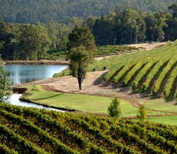 Brookhampton Estate Vineyard - Grafton Accommodation