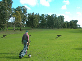 Coffin Bay Golf Club - Grafton Accommodation