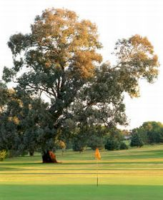 Cowra Golf Club - Grafton Accommodation