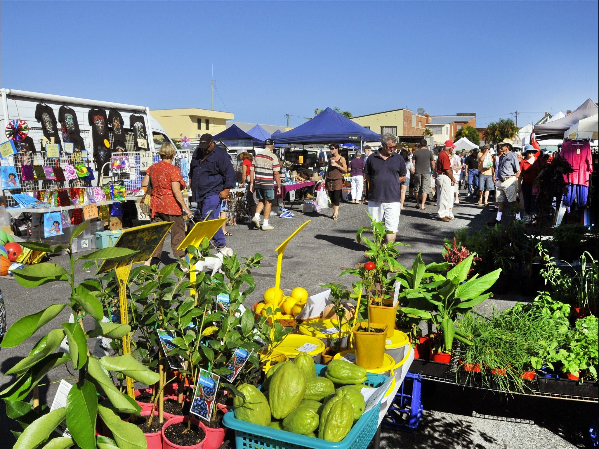 Maclean Community Monthly Markets - Grafton Accommodation