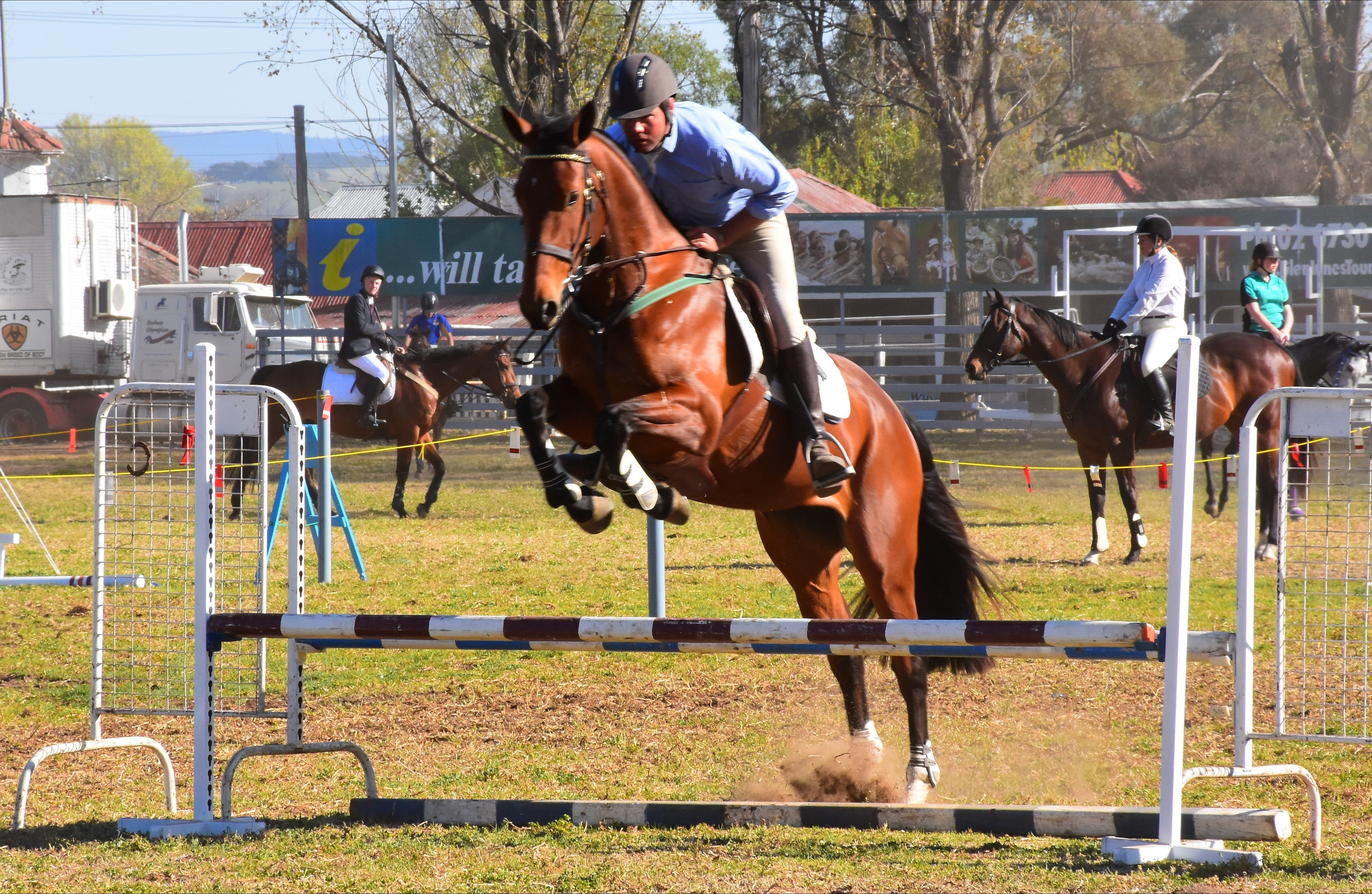 Glen Innes Pastoral and Agricultural Show - Grafton Accommodation