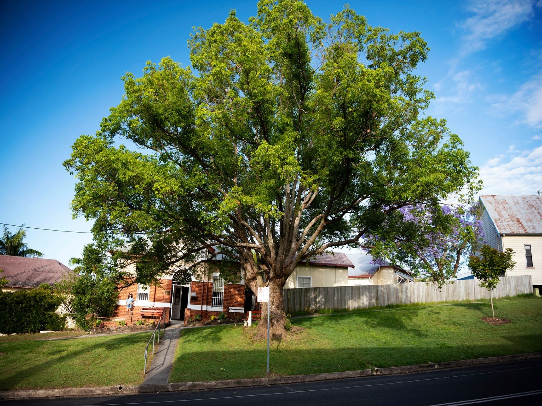 Big Bat Wildlife and Eco Festival - Grafton Accommodation