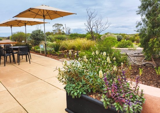 Arid Lands Botanic Garden Cafe - Grafton Accommodation