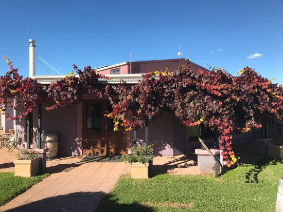 Jester Hill Wines - Grafton Accommodation